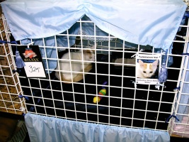 photo 002002 . Ipekkedinin Birinci Bebek (Mikke) [TUV d 62] . 2004-08-21
