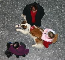 kuva 004001 . koiria . 4.12.2004
