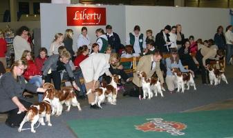 kuva 004002 . koiria . 4.12.2004