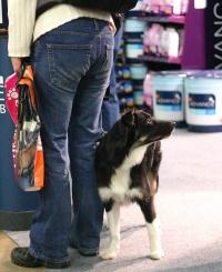 kuva 004004 . koiria . 4.12.2004
