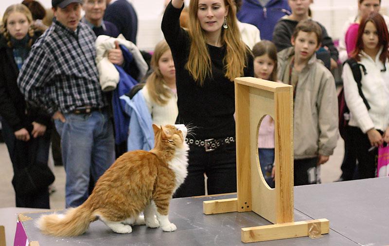 cat agility, photo 004025, 2004-12-04