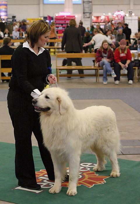 koiria, kuva 004030, 4.12.2004