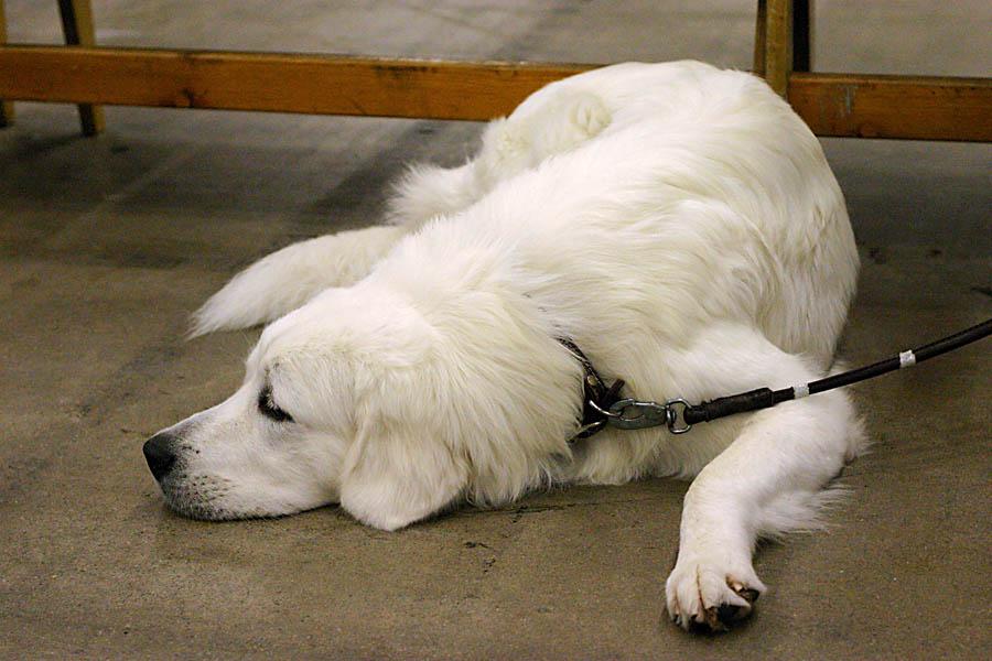 koiria, kuva 004031, 4.12.2004