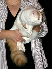 photo 005020 . Ipekkedinin Birinci Bebek (Mikke) [TUV d 62] . 2005-02-05