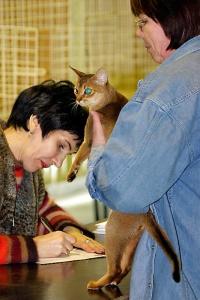 photo 006010 . CH Bluestream's Iris, JW (Iris) [ABY n] . 2005-02-19