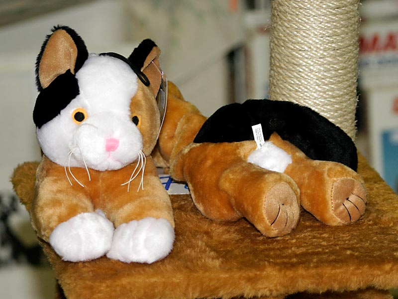 this toy cat is probably a female, photo 007005, 2005-02-20