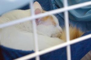 photo 008013 . Ipekkedinin Birinci Bebek (Mikke) [TUV d 62] . 2005-03-05
