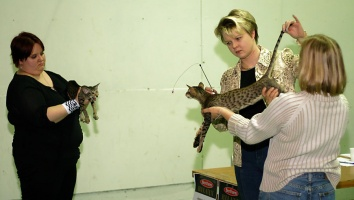 photo 010041 . CornFlakes Devil Inside [OSH n 24] & Meaow Fat Gimli [OSH n 24] . 2005-04-23