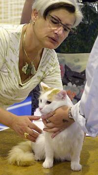 photo 012138 . CH Ipekkedinin Birinci Bebek (Mikke) [TUV d 62] . 2005-06-18
