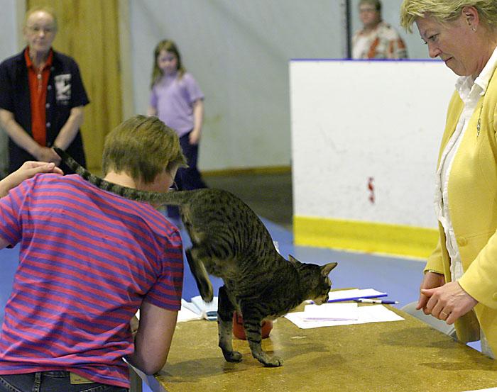 IP,EC Sultsinan Yönsilmä, DSM [OSH n 24], kuva 012187, 18.6.2005