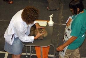 photo 013003 . EP,EC,SW2004 Henrietan Hullabaloo, DSM [PER n 22] . 2005-07-30