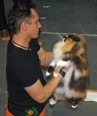 photo 013010 . GIC Birstein Celine d'Or [PER f 03] . 2005-07-30
