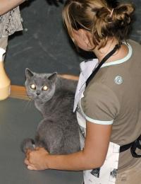 kuva 013126 . Blueline Tansy [BRI a] . 30.7.2005