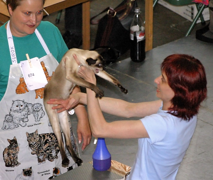 CH Bajangin Fanastasia [SIA n], photo 013152, 2005-07-30