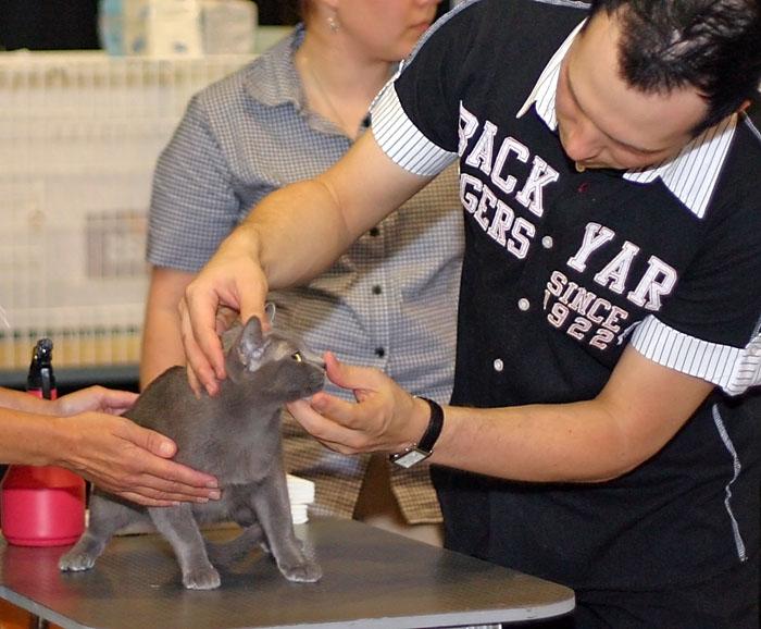 EC Catfever's Anjing-Feng (Elmo) [KOR], kuva 015034, 31.7.2005