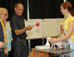 photo 015064 . Metsäkansan Brionna (Buffy) [CRX f 02] . 2005-07-31
