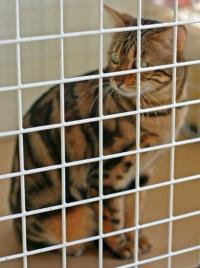photo 018035 . CattiCartano's Shining Paws (Shiny) [BEN n 22] . 2005-09-17