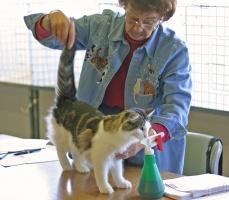 kuva 018086 . FluffyTail's Briana Bromine (Juusto) [NFO n 09 22] . 17.9.2005