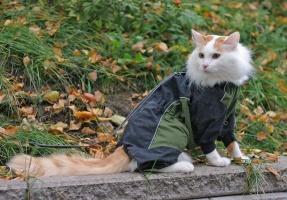 photo 020274 . bonus photo IC Ipekkedinin Birinci Bebek (Mikke) [TUV d 62] enjoys the autumn . 2005-10-01