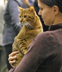 kuva 020232 . EC Leopard Jaya of Golden Coast*CH [BEN n 24] . 1.10.2005