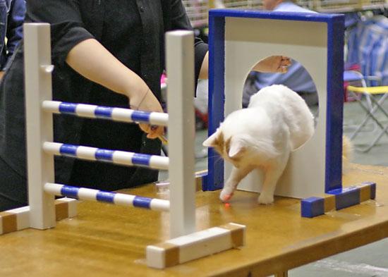 IC Ipekkedinin Birinci Bebek (Mikke) [TUV d 62] aloittaa uransa kissa-agilityssä, kuva 021195, 2.10.2005