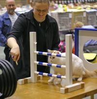 kuva 021196 . IC Ipekkedinin Birinci Bebek (Mikke) [TUV d 62] aloittaa uransa kissa-agilityssä . 2.10.2005
