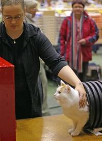 kuva 021197 . IC Ipekkedinin Birinci Bebek (Mikke) [TUV d 62] aloittaa uransa kissa-agilityssä . 2.10.2005