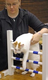 kuva 021198 . IC Ipekkedinin Birinci Bebek (Mikke) [TUV d 62] aloittaa uransa kissa-agilityssä . 2.10.2005
