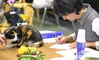 photo 021270 . Helmi [HCS] female . 2005-10-02