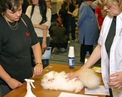 photo 023188 . Uno Creame Sensation [PER e 33] . 2005-10-30