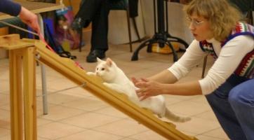 photo 025280 . cat agility . 2005-11-27