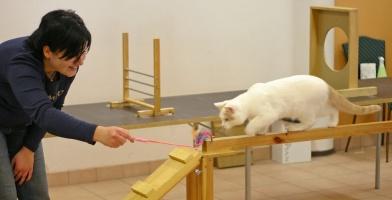 photo 025283 . cat agility . 2005-11-27