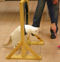 photo 025284 . cat agility . 2005-11-27