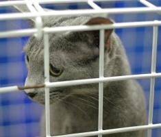 photo 026263 . DK*Paragon Blue Fiver's Clover [RUS] . 2005-12-04