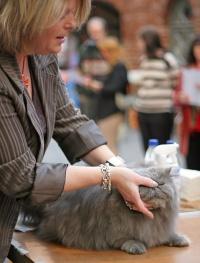 kuva 028081 . GIP Mimosan Lean On Me (Ursula) [PER a] . 6.1.2006