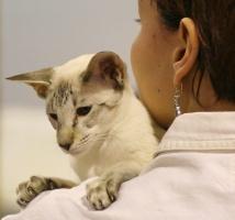 kuva 030258 . Qasiiban Miss. Milkshake [SIA b 21] . 7.1.2006