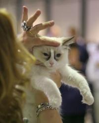 photo 031149 . Cat's-JM Niku-Nox [RAG n 03] . 2006-02-11