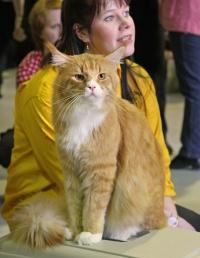 photo 031239 . IC GB*Kittycoonz Santa Claws [MCO d 09 23] . 2006-02-11
