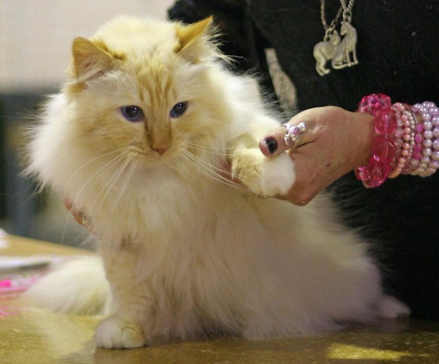 EC Fotocatin Catty Taavi [SBI d 21], photo 031302, 2006-02-11