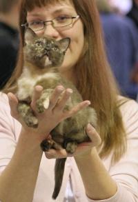 kuva 031414 . Ninelli's Gurmánka Greta (Nuppu) [BUR f] . 11.2.2006