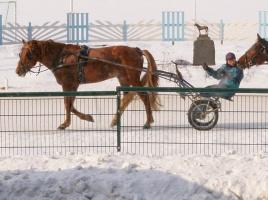 kuva 032291 . Hevosia ikkunassa . 4.3.2006