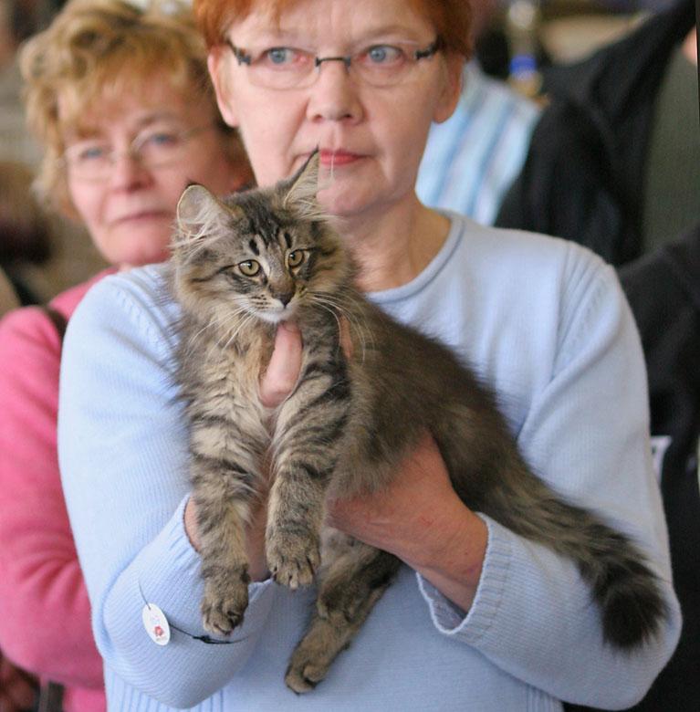 Kehrääjän Cool Cat [NFO n 23], photo 032326, 2006-03-04