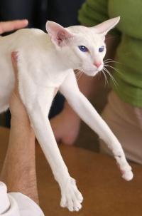 kuva 032333 . Delicatin Linen White (Liinu) [SIA w 67] . 4.3.2006