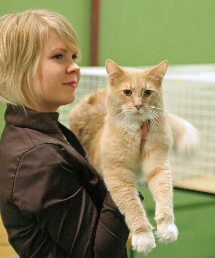 The Sympathycats Verso (Arttu) [MCO e 09 23], photo 034062, 2006-04-01