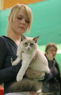 kuva 035191 . Cat's-JM Niku-Nox [RAG n 03] . 2.4.2006