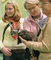 kuva 035254 . Metsäkansan Bambi v.Bristol [CRX f] . 2.4.2006