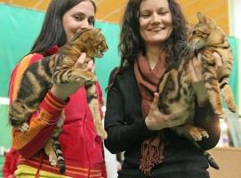 kuva 035323 . Cayenne Dixie Chick [BEN n 22] & Kissalehdon Bianca [BEN n 22] . 2.4.2006