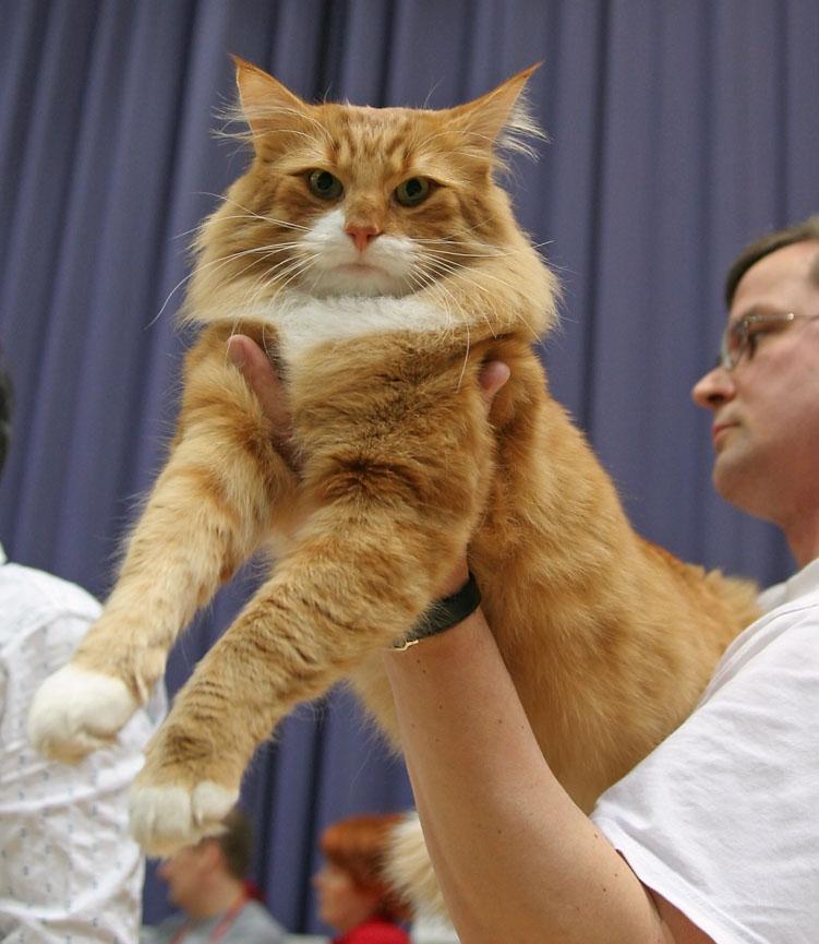 EC Tähtitassun Puuha Pete, DSM [NFO d 09 23], photo 036108, 2006-04-22