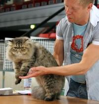 photo 043136 . Precious On The Spot (Mikko) [PER n 24] . 2006-07-30