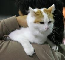 photo 045199 . Cesmes Adile Aysun (Mimosa) [TUV d 62] . 2006-09-03